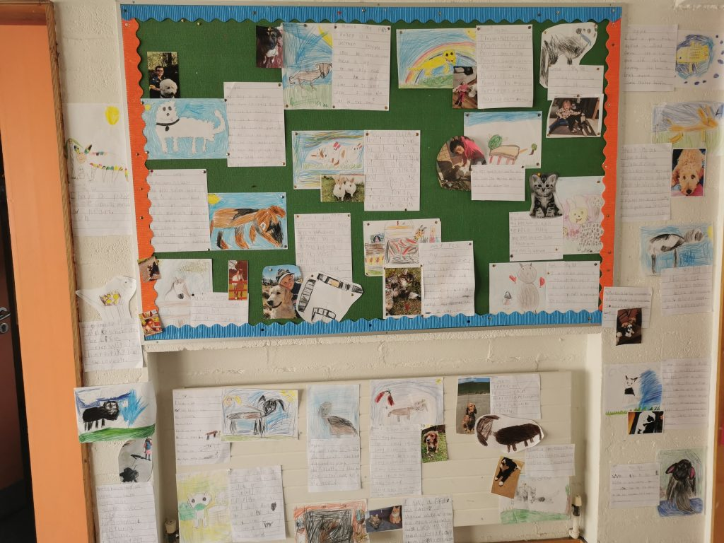 Orla's Senior Infants were busy drawing portraits of their pets and writing about their furry friends